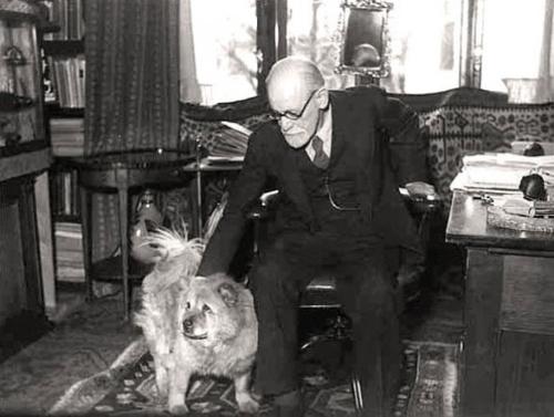 זיגמונד פרויד אבי הפסיכואנליזה מלטף כלב בקליניקה