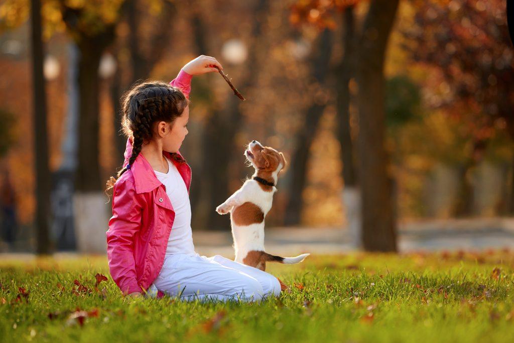 תמונה של ילדה משחקת עם כלב בפארק